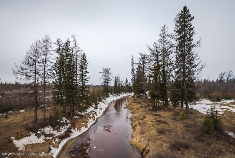 Якутская тайга фото 23