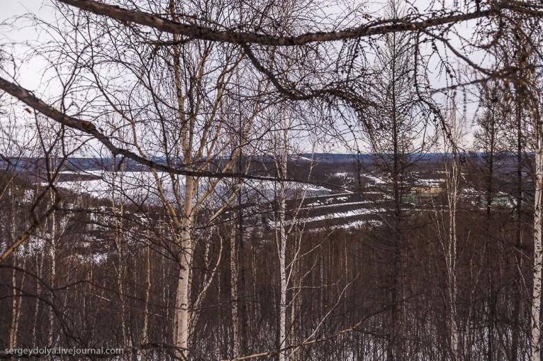 Якутская тайга фото 15