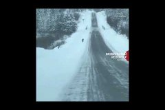 Автомобилист из Мирного снял на телефон огромного волка